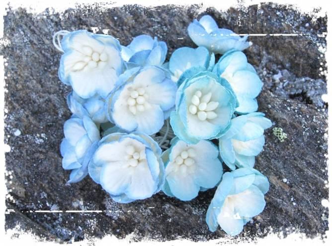 Bilde av Kirsebærblomst, blå (6)