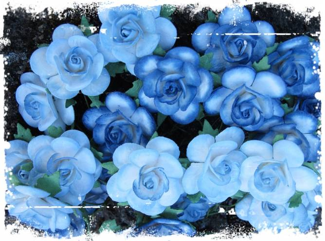 Bilde av 2,5 Roser farget kant blå (6)