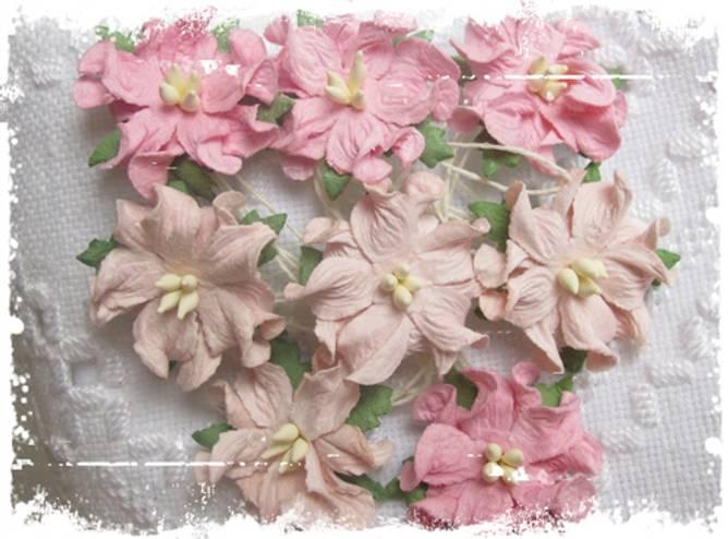 Bilde av Små gardenia, lys rosa (6)
