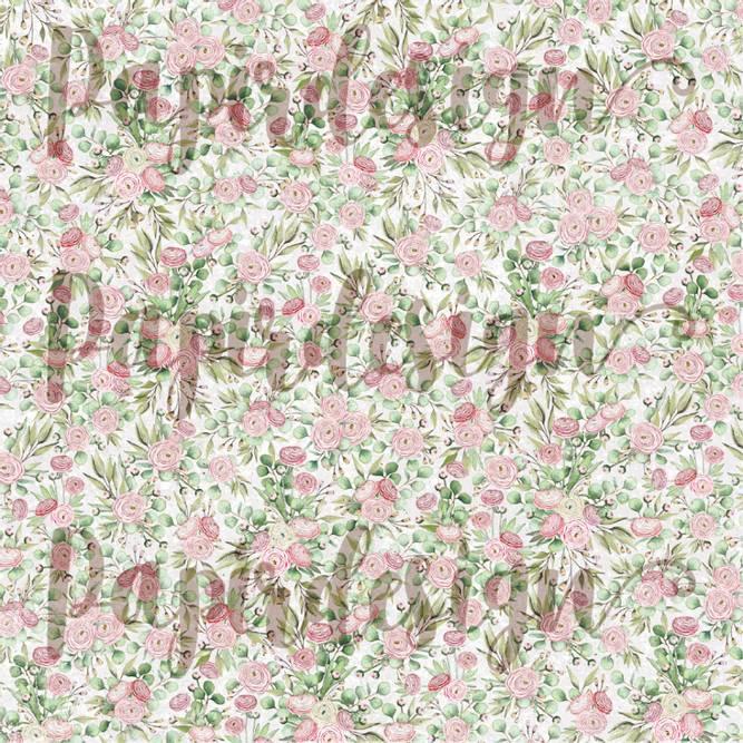 Bilde av PD 2100567 Ranukler ( 25 ark